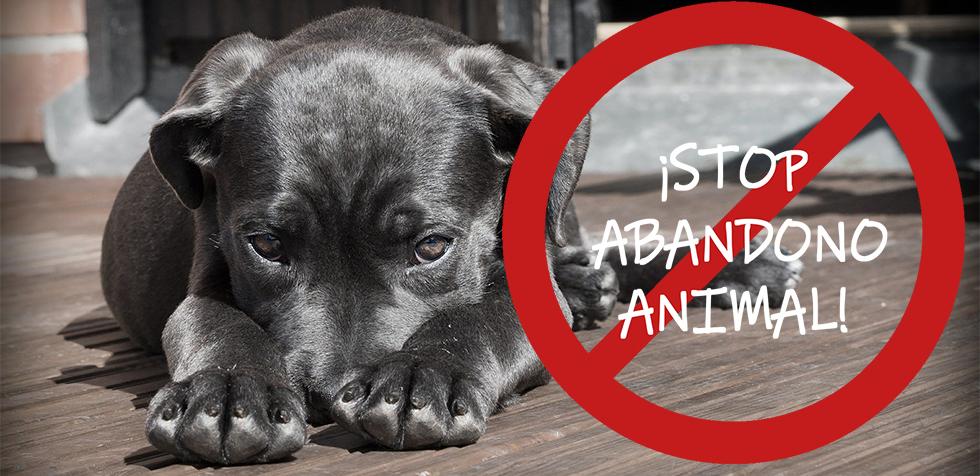 Stop abandono animal